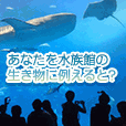 あなたを水族館の生き物に例えると?