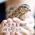 【あなたを鳥に例えると?】